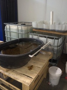 Aquaponic Research Setup - Emily Nusz