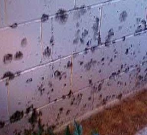 Basement wall mold 2Anderson