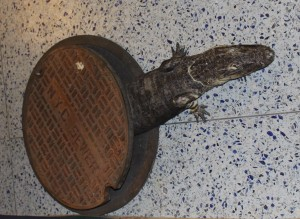Alligators in the sewer? Find out the truth behind the rumors.